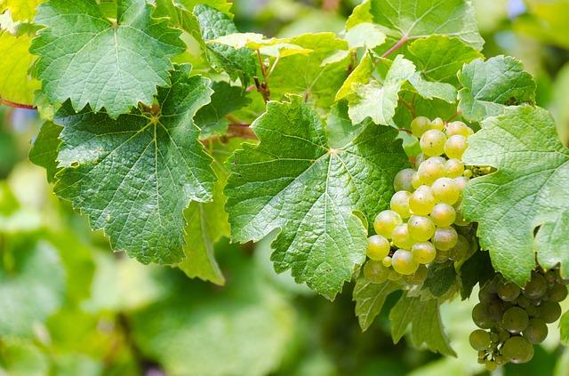 Guide pour choisir son vin blanc
